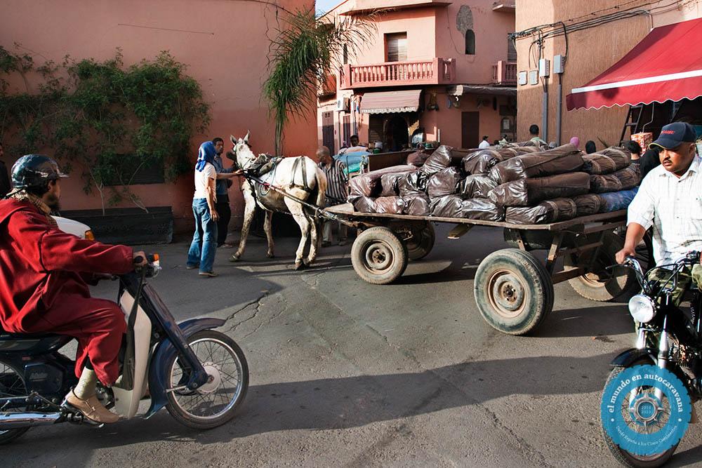 atasco burro